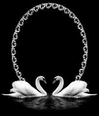Engraving Swans