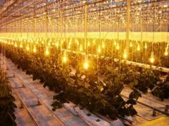 Mounting of lighting systems of greenhouses