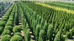 Planting of saplings, gardening.