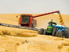 Monitoring of the market of grain crops across the