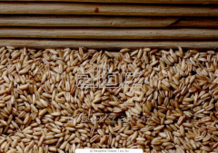 Export of grain