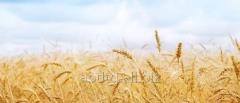 Выращивание органических культур на заказ