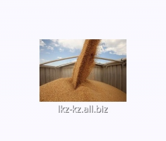 Service of processing of grain crops