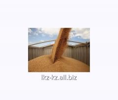 Услуга переработки зерновых культур