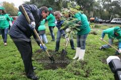 Посадка деревьев,кустарников,многолетников,однолетников 30% от стоимости растения.