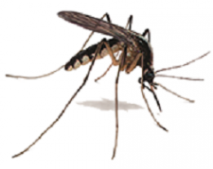 Processing of the territory from mosquitoes for