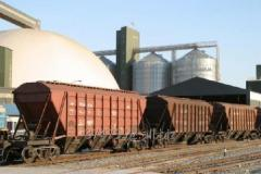 Transportation of cereal crops