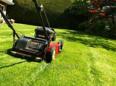 Shearing bushes and lawns