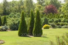 Trees and shrubbery planting , fixing your garden