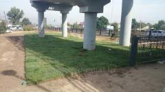Озеленение парков