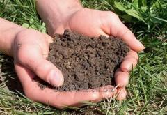 Test of the soil (the analysis becomes 2 weeks in