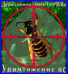 Extermination of wasps and hornet's nests in