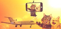 Transportation of pets