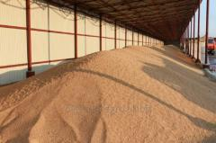 Storage of grain crops
