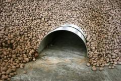 Технологии хранения овощей навалом