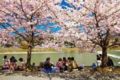Групповой тур Ханами в Японию