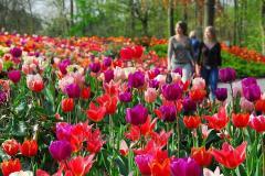 Тур в Нидерланды в парк Кёкенхоф