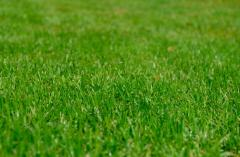 Services in lawns arranging