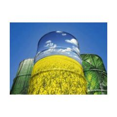 Storage of oilseed crops