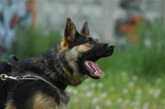 Охрана с собаками предприятий