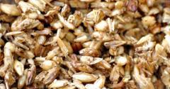 Утилизация отходов пивоваренного производства, утилизация некачественной продукции в Казахстане
