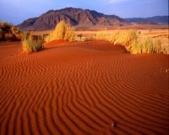 Тур Шымкент-пустыня Кызылкумы