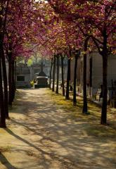 Оформление документов и организация места на кладбище