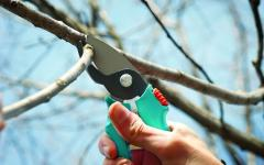 Pruning of trees