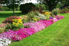 Selection of plants for garden