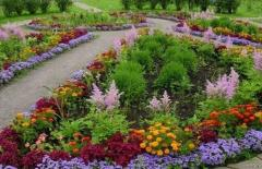 Creating of flower beds
