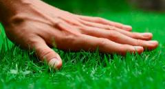 Sowing of seed lawn