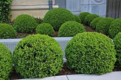 Hedging of plants