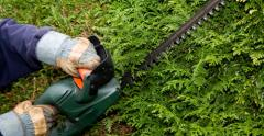 Shearing of hedges, trees and shrubs