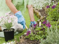 Care for flower beds
