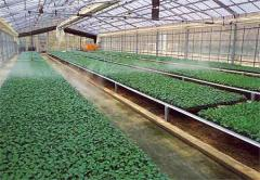 Irrigation of hot-houses