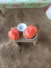 Выращивание овощей в теплице (помидоры)