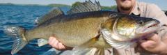 Тур на рыбалку
