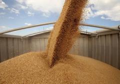 Перевозки зерна