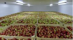 Хранение фруктов, продуктов