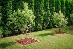 Озеленение и благоустройство территорий