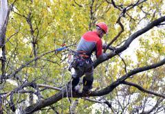 Обрезка крон деревьев