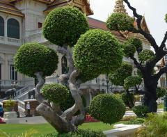 Формовка крон деревьев