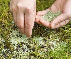 Ухоженный газон – основные работы по восстановлению и ремонту