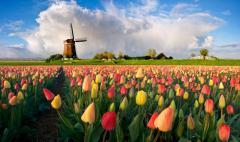 Помощь в оформлении визы в Нидерланды