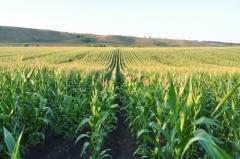 Агросопровождение, Агротехнологическое