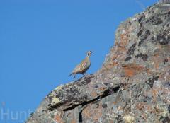 Kazakistan'da kuşların Avcılık