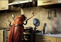 Борьба с бытовыми насекомыми
