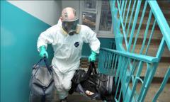 Очистка от инфекций, насекомых и грызунов