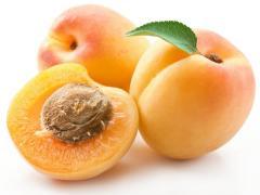 Выращивание яблок и абрикос