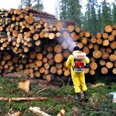 Обеззараживание древесины